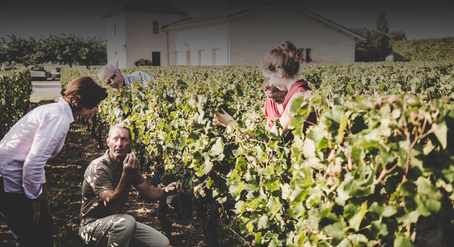 chateau-juguet-grand-saint-emilion-vin
